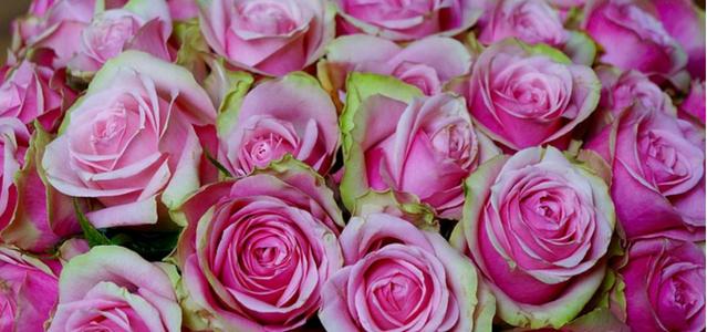 Mind-ing the Roses of Abundance