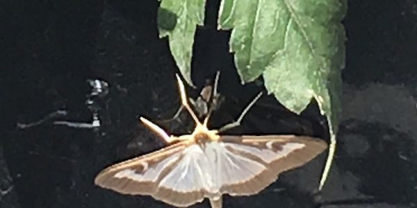 A Butterfly Sign from the Angels?